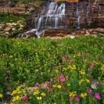 Identify Wildflowers in Glacier National Park