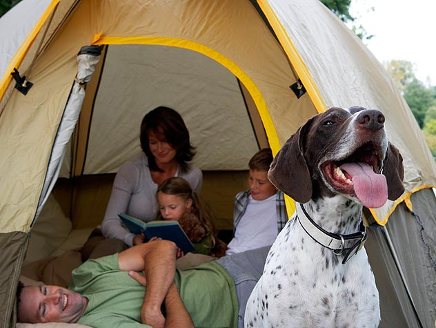 Camping and Backpacking Sleeping Bag Gear For Dogs