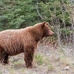 Check Out this Terrifying Bear Encounter (Video)