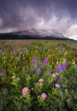 Purple Yellow Wildflower