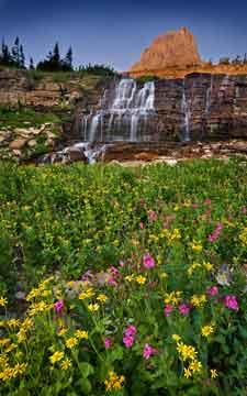 Wildflower Identification Guide Identify A Wildflower In