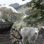 hiking hidden lake trail in glacier national park 21463077
