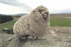 Benefits of Wool Insulation