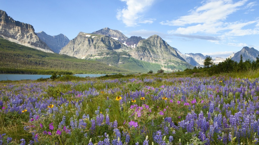 Glacier-National-Park-flowers